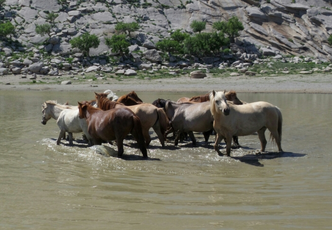 Trip to the Gobi Desert, Mongolia. Part One – beautiful horses and the sacred mountain Zorgol Khairkhan