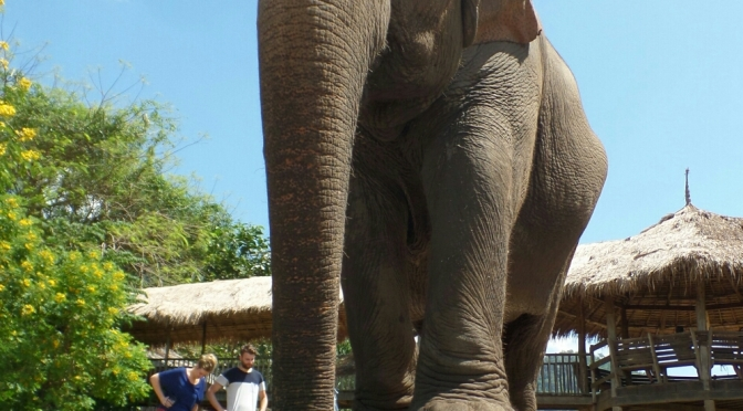 The Elephant Nature Park in Chiang Mai, Thailand